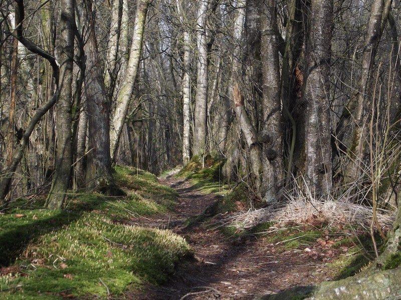 Castenrayse Vennen, pad door moerasbos