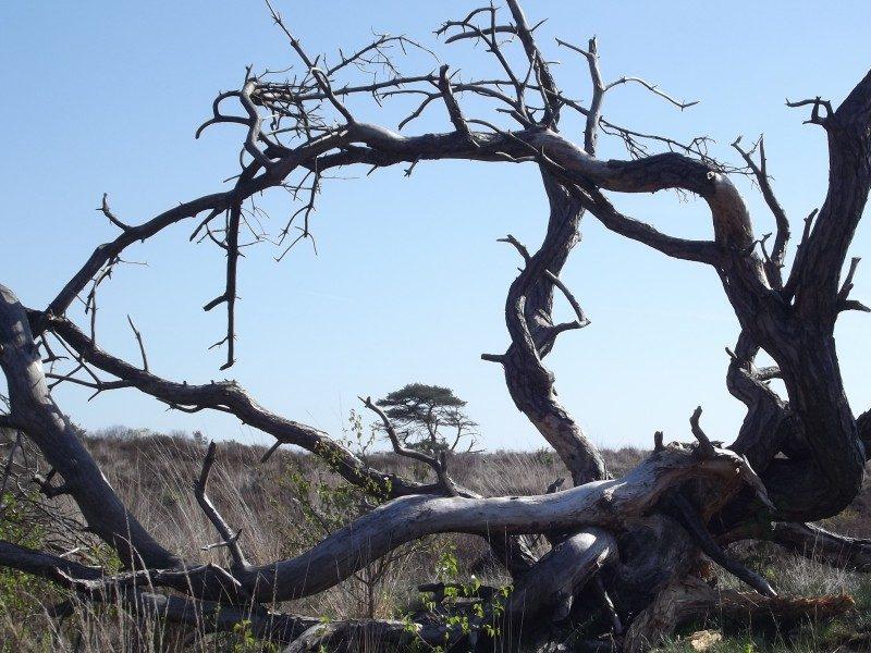 Groote Heide, doorkijk