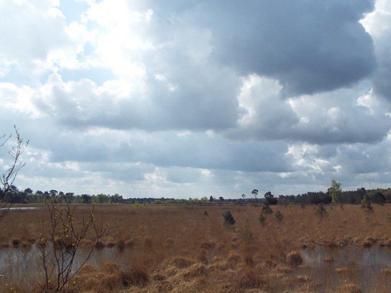 De uitgestrektheid van de Groote Heide