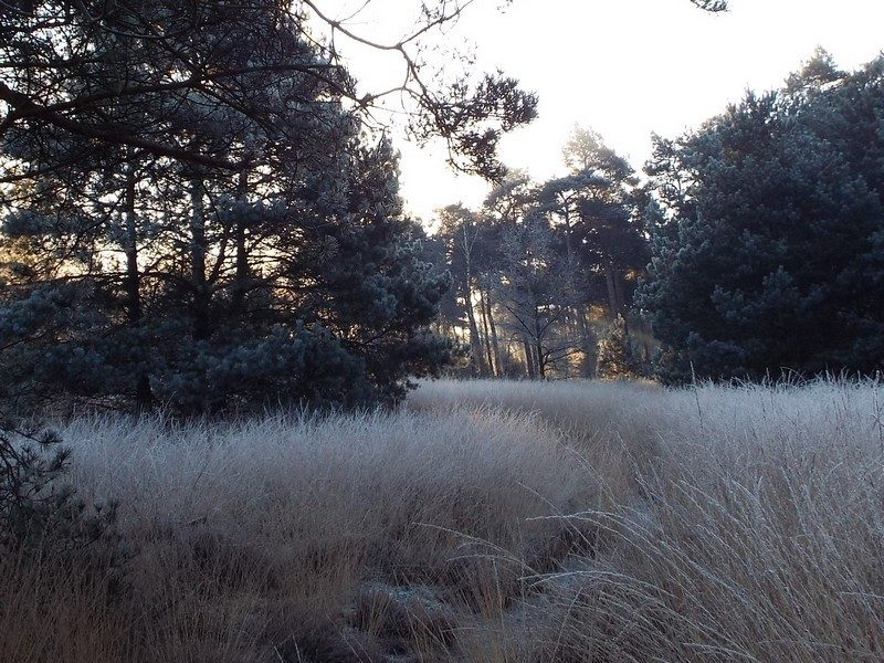 Bosgebied de Nederheide, nu in de winter
