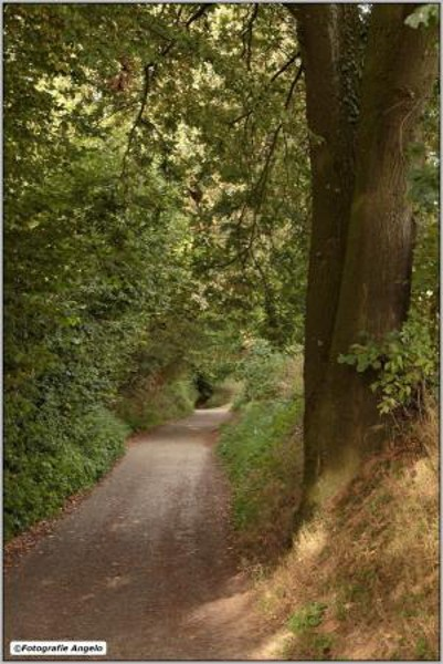 Een holle weg in het Beerenbosch