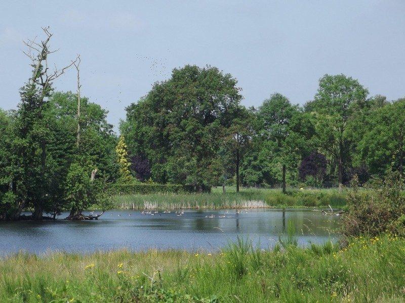 Natuurgebied Langven en Maurik, nogmaals het Langven