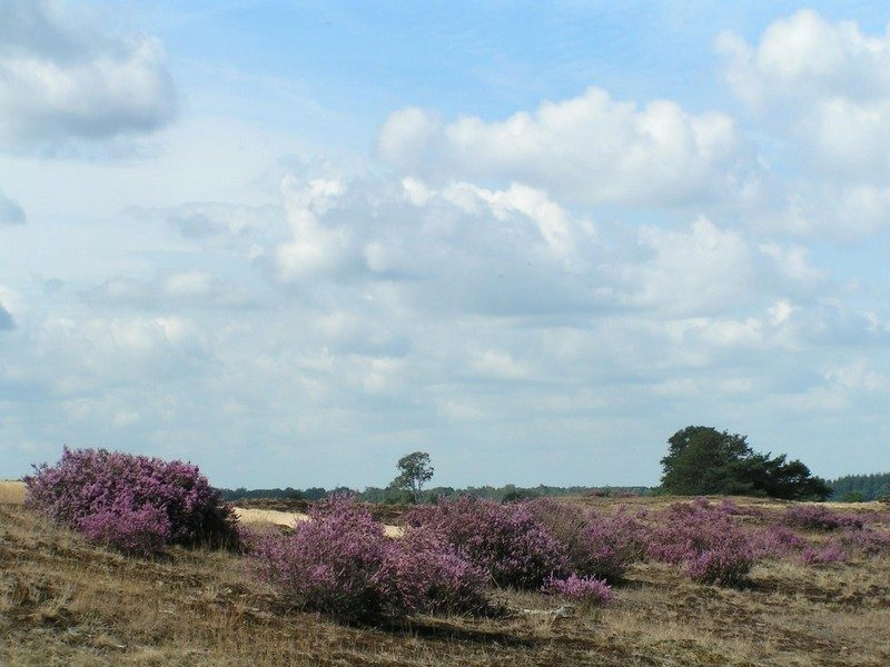 De Strabrechtse Heide