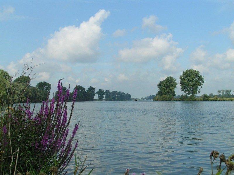 Zicht op de Maas