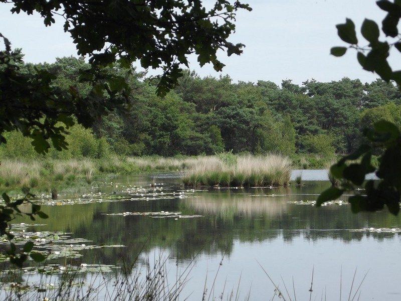 Natuurgebied De Malpie, het Groot Malpieven
