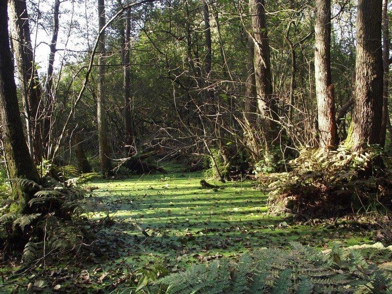 Natuurgebied Schuitwater, moerasbos