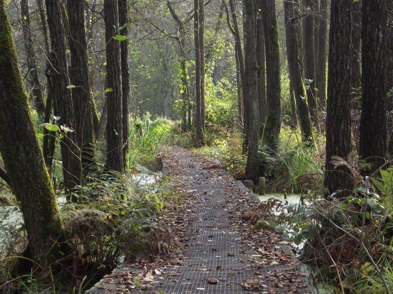 Natuurgebied Schuitwater, knuppelbrugje