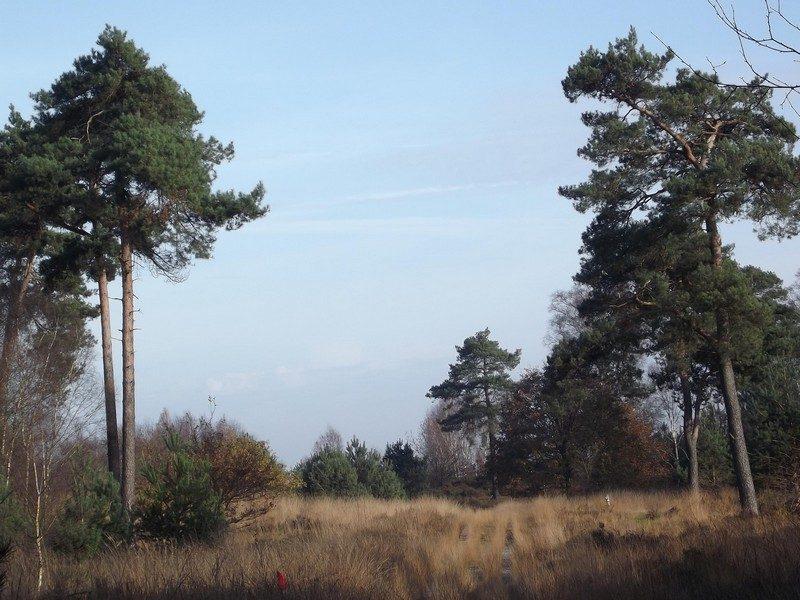 Landgoed de Hamert