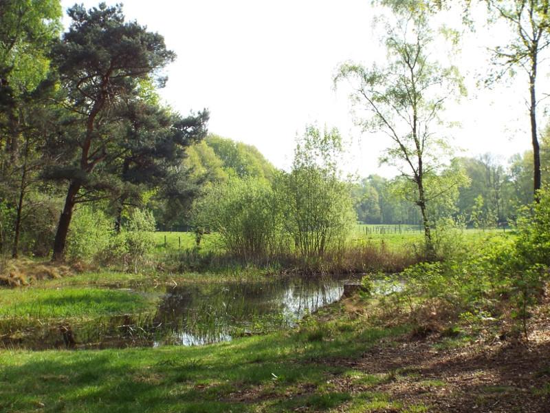 Vennetje in Genneper Heide