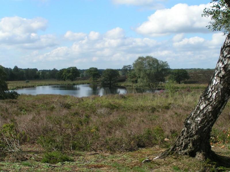 Landgoed de Hamert, het Pikmeeuwenwater
