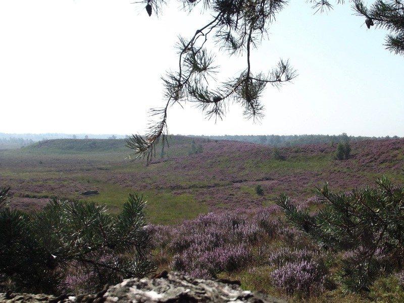 Landgoed de Hamert, uitzicht vanuit de Dikkenberg