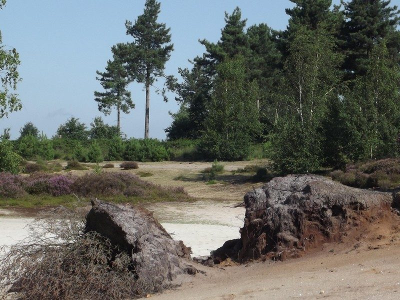 Omgeving van het Reindersmeer
