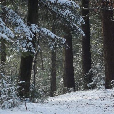 Wandelroute Hazenputten-de kleine tocht, te Nijnsel
