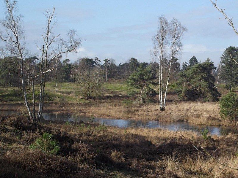 De Wellse Heide