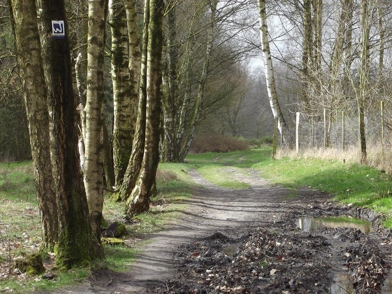 Pad richting heidegebied Hühnerkamp