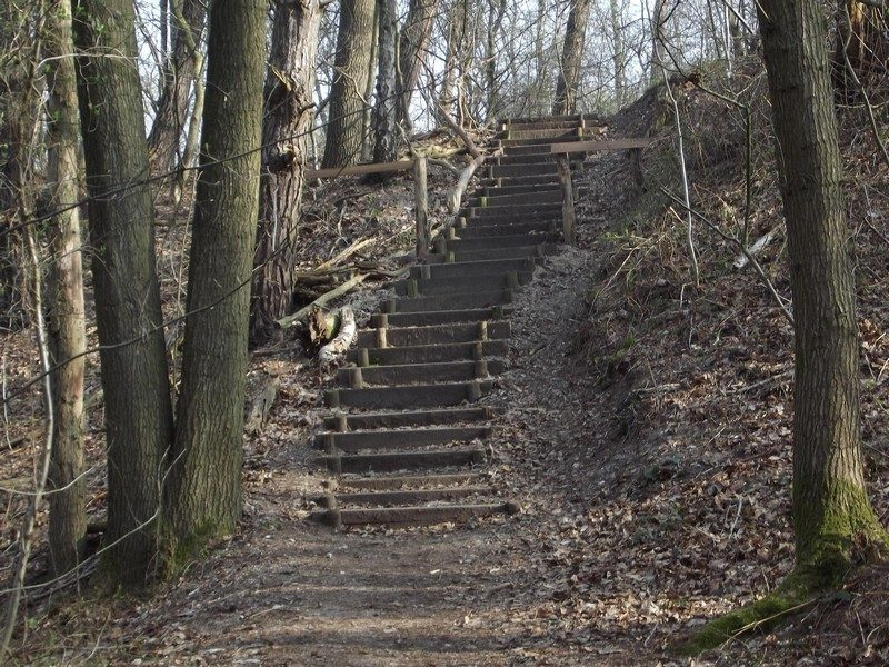 Natuurgebied Holtmühle