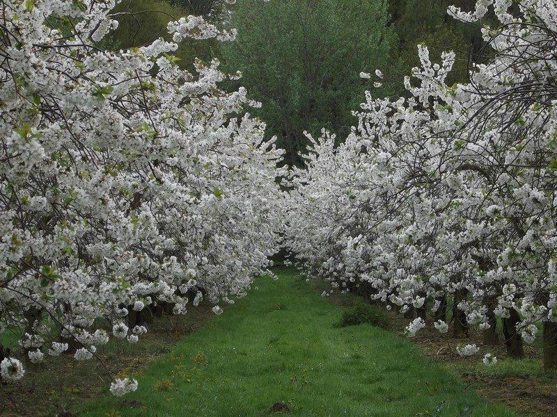 Fruitbomen omgeving Beesel