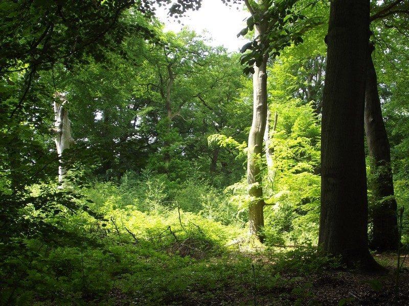 Het Munnichsbos