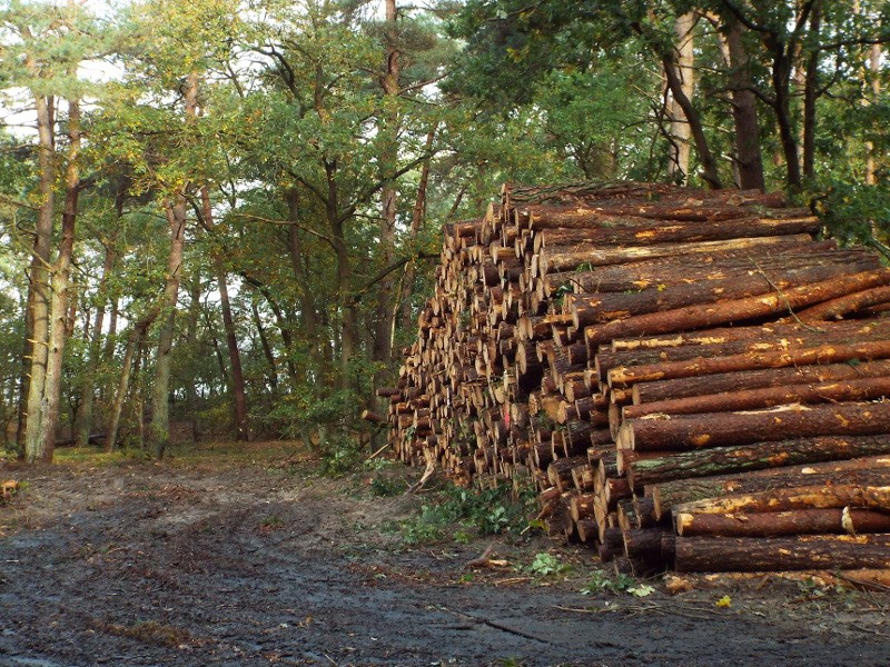 Boswerkzaamheden in Loonse en Drunense Duinen