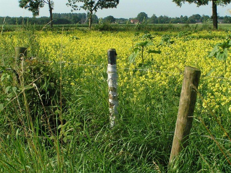 Bloemrijke graskanten