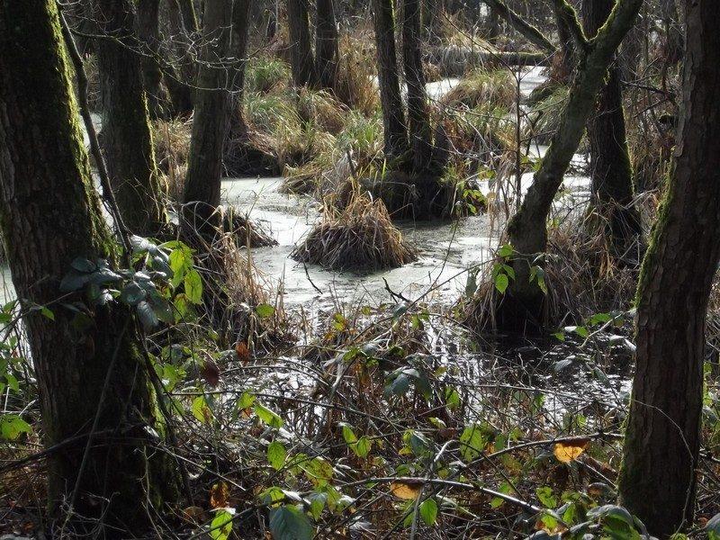 Het natuurgebied Koelbroek