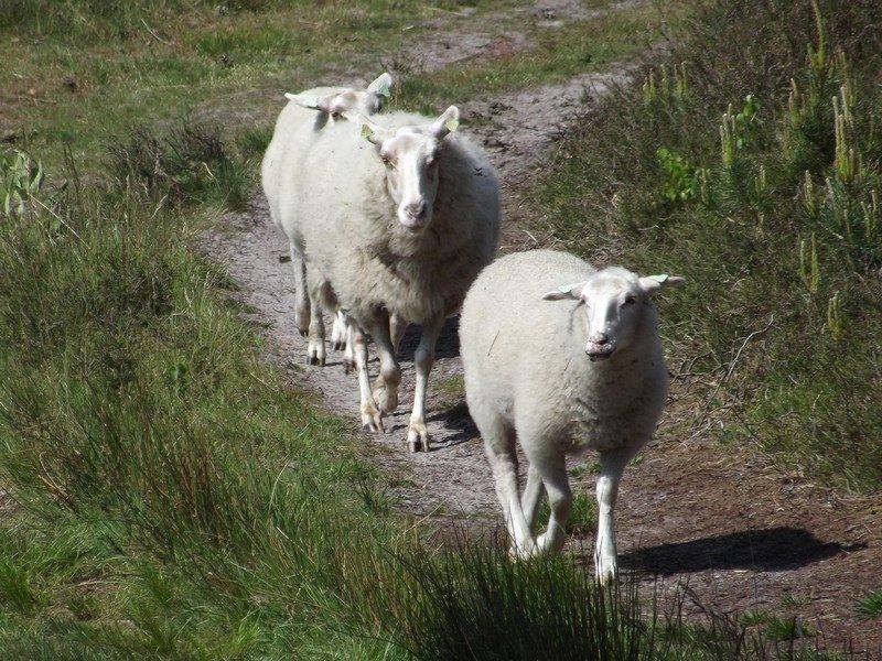 Enkele bewoners op de Beegderheide