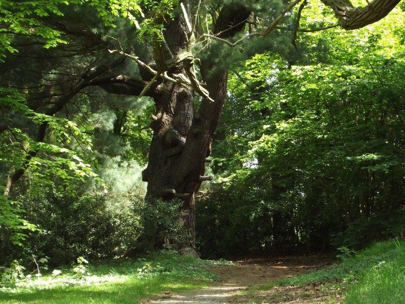 Het park rond het kasteel Aerwinkel