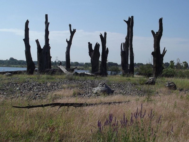 Bomencirkel bij de Molenplas