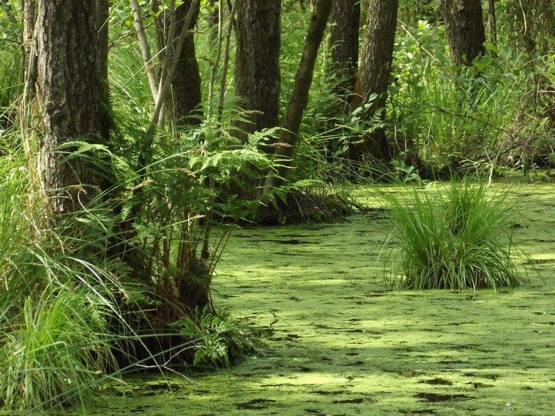 Het Schuitwater, moerasbos
