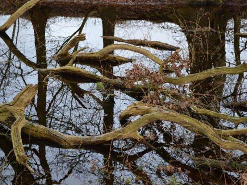 Stukje uit het verleden, plassen achter de Leidijk