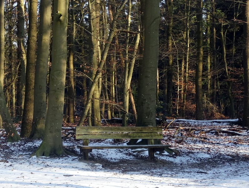 De ingang van het Roelager bos