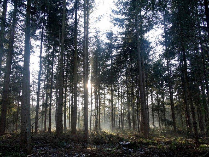 Het oude Roelager bos
