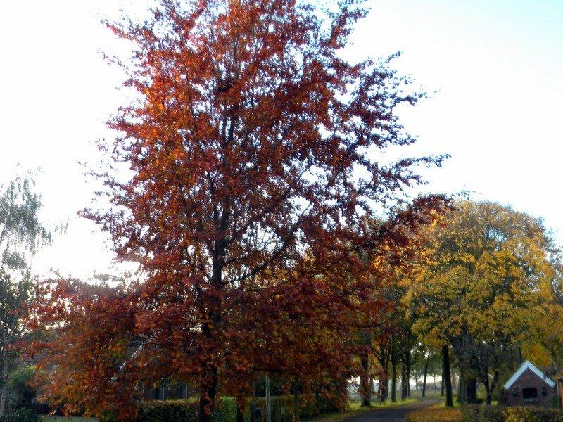 Oud Veele in de herfst