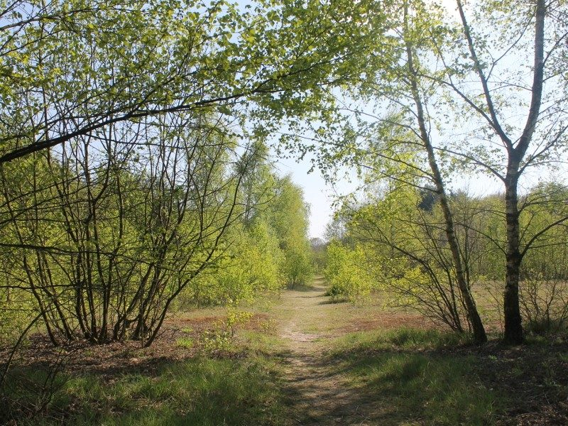 Het Ter Apeler bos
