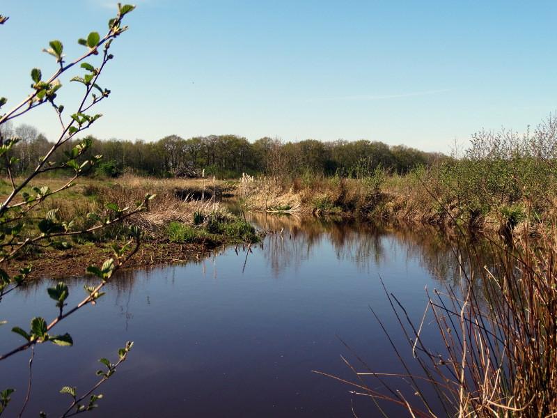 Een natuurgebied in wording langs de Ruiten Aa