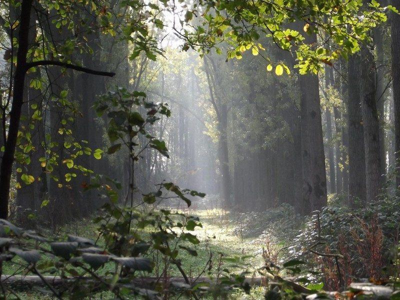 Natuurgebied Kaldenbroek