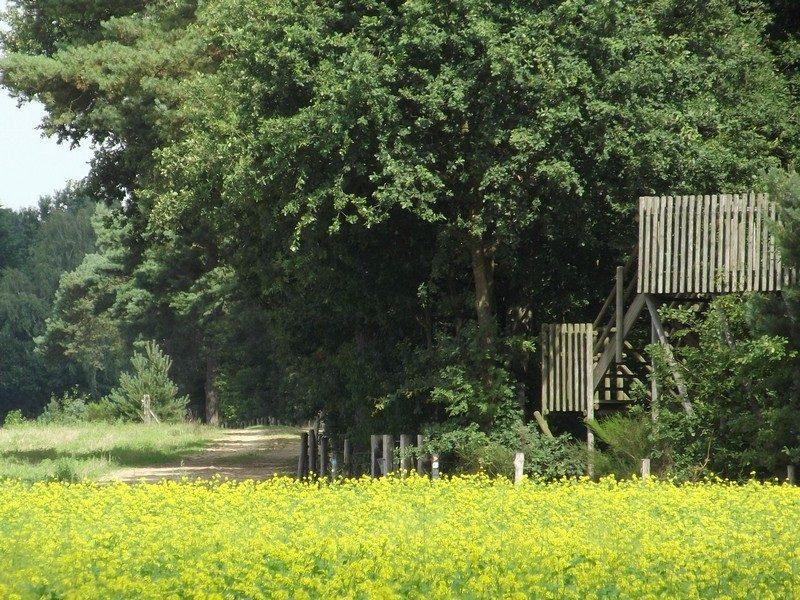 Uitkijktoren aan rand van de Meinweg