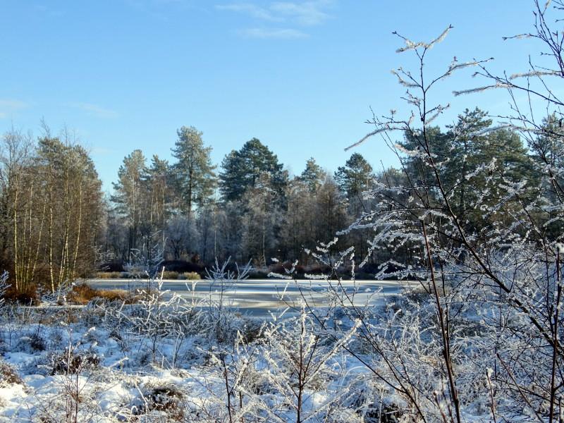 Een winters ven in de Breedwisch