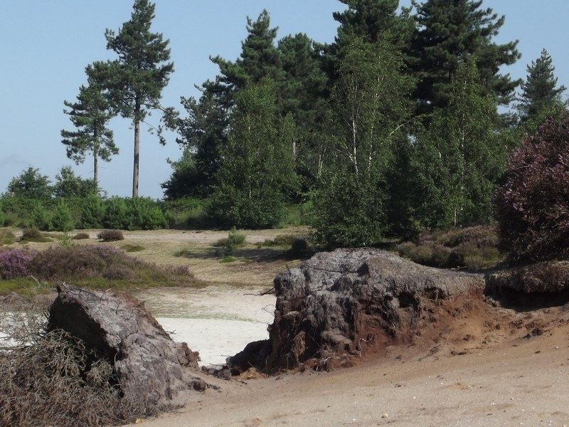 Omgeving Reindersmeer