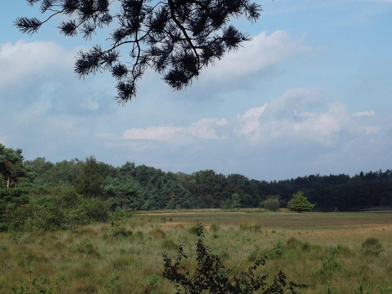 De Rovertse Heide