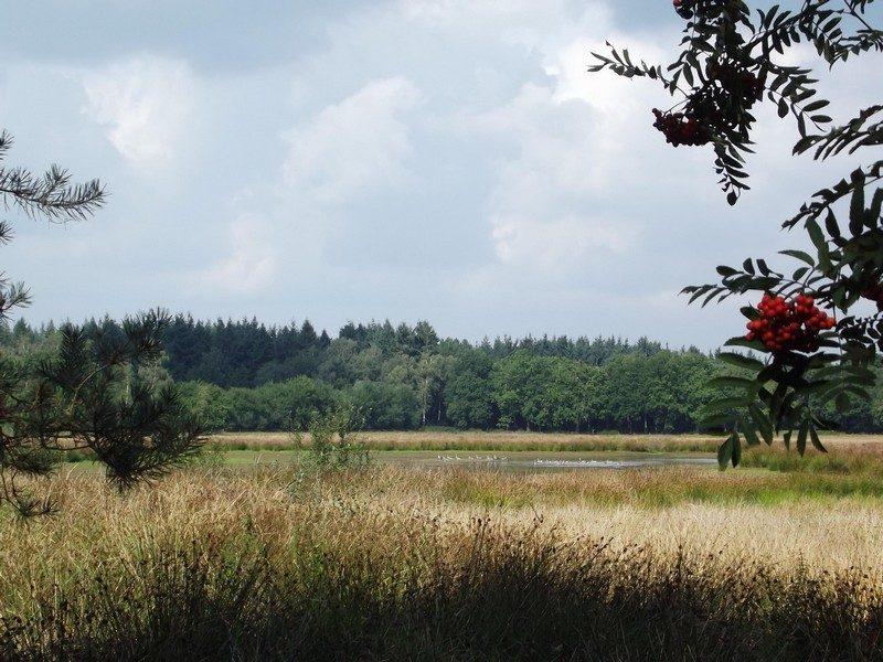 De Rovertse Heide, het ven Papschot