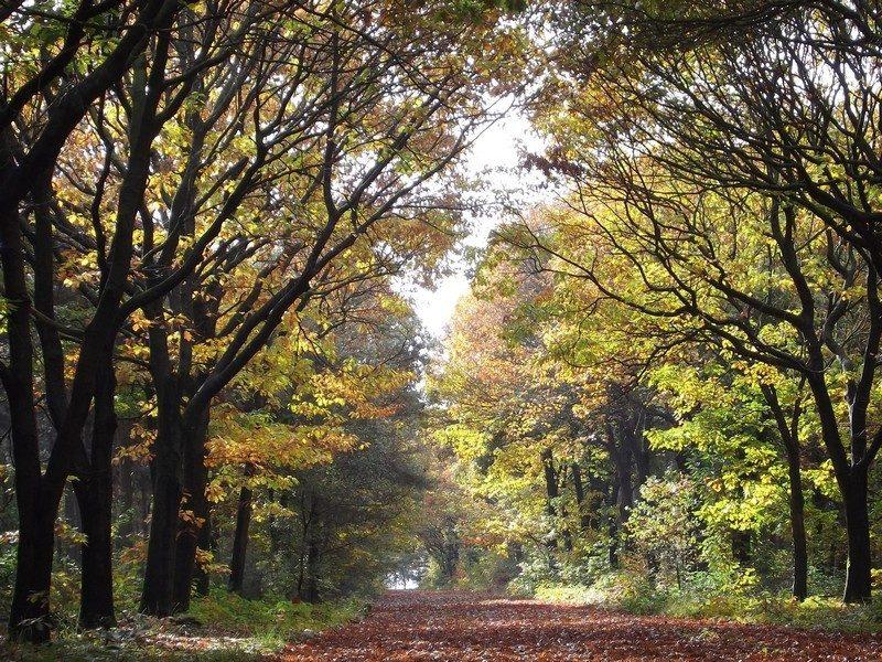 Bosgebied Kemkensberg