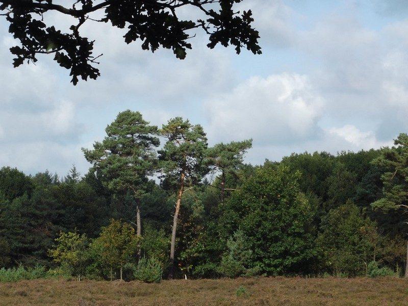 Spijkerse-Heide