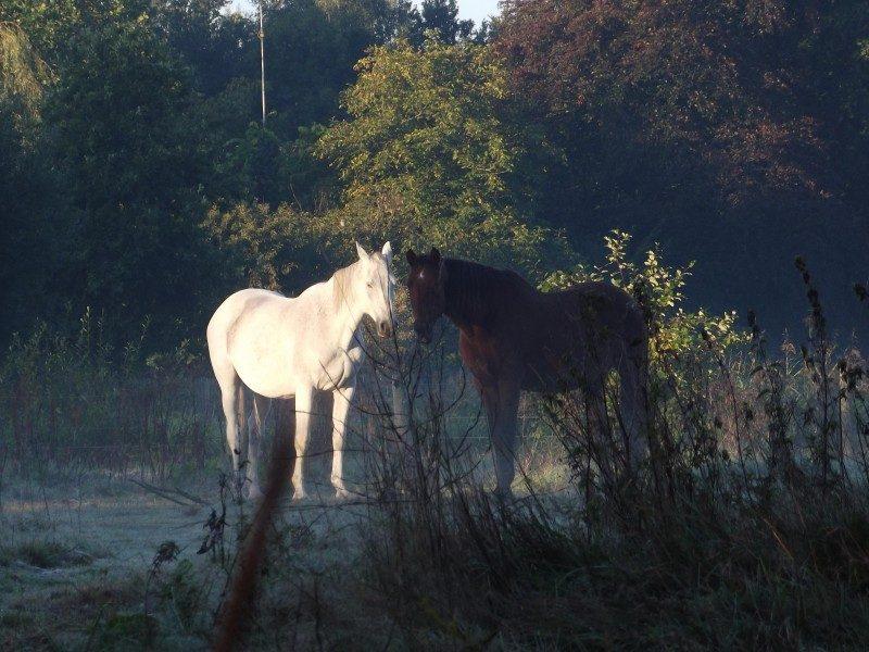 Paarden in het natuurgebied Smalwater