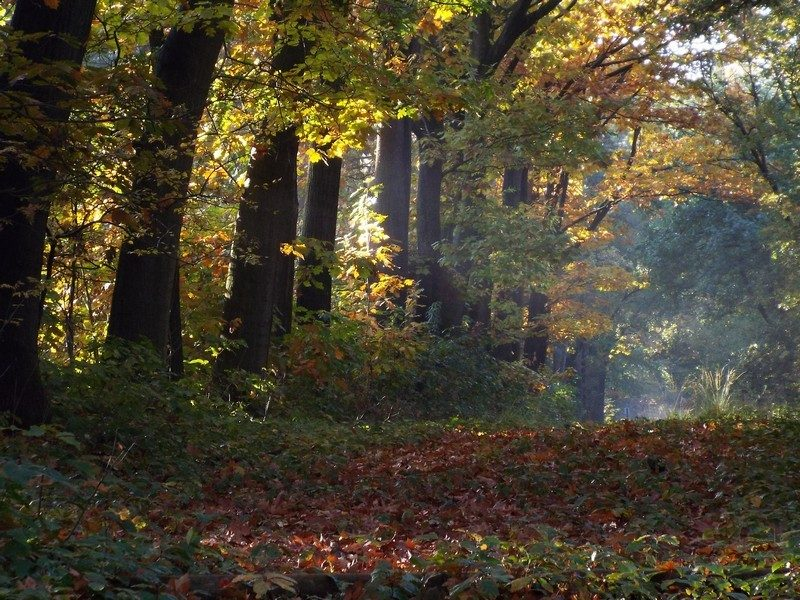 Bosgebied de Testrik