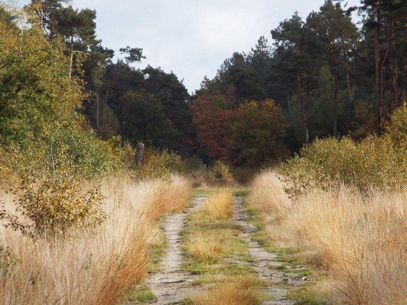 De Peelse Heide