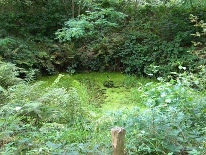 De enge plek in het bos bij Ter Borg
