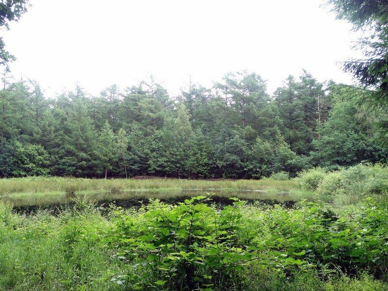 Een open plek in het Jipsingboertanger bos