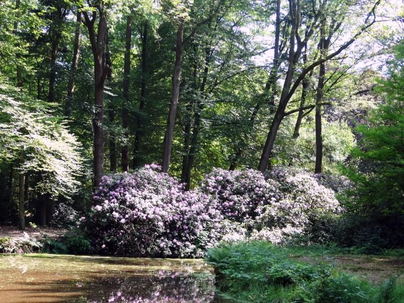 Voorjaar in het Kloosterbos.