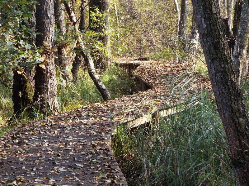 Knuppelbrugje in beekdal van de Rode Beek